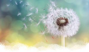 BRAT Dandelion blowing in the wind